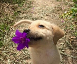 adorable, cute dogs, and cute image