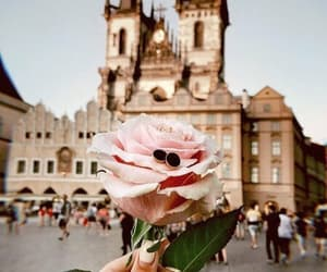 city, flowers, and rose image