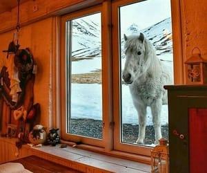 animal, cool, and house image