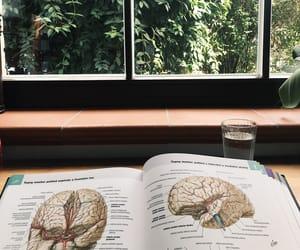brain, anatomy, and studying image