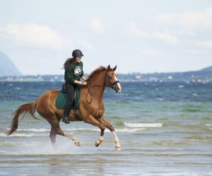 horse, beach, and equine image