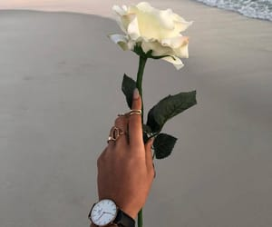 beach, rose, and flower image