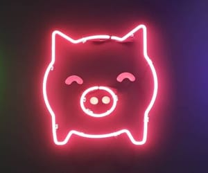 neon, pig, and neon pink image