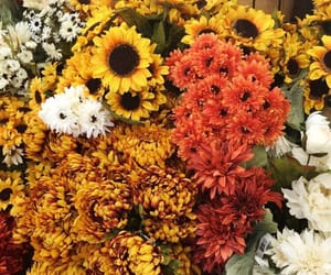 flowers and fall image