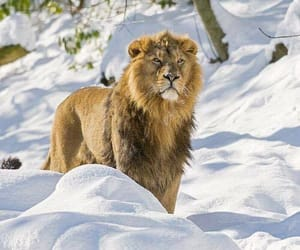 Animales, naturaleza, and rey image