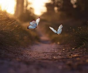 Image of: Whatsapp Butterfly And Forest Image We Heart It 544 Images About Dps On We Heart It See More About Girl Hair And