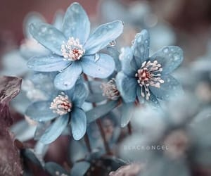 flowers, light blue, and water drops. nature image