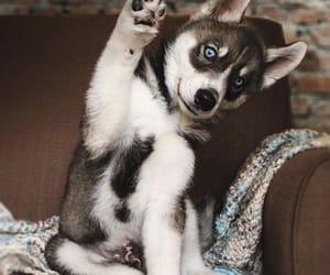 animal, beautiful, and cutie image