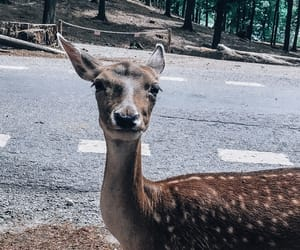 animal, deer, and goals image