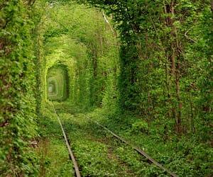 aesthetic, wonderland, and amazing image