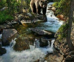 Bear Life