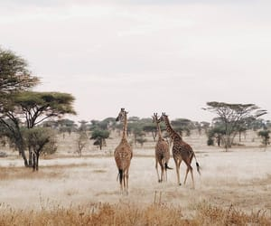 africa, nature, and photography image
