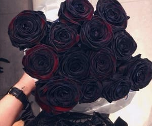 rose, black, and beautiful image