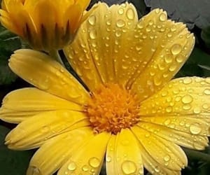 belleza, flor, and primavera image