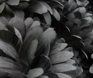 dark and flores image