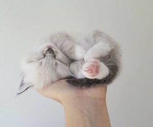 cat, sleeping, and cute image