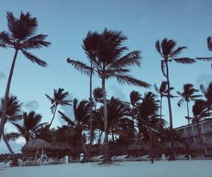 Caribbean, caribe, and palmera image