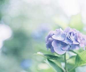 aesthetic, violet, and flowers image