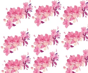 flower, patterns, and pink image