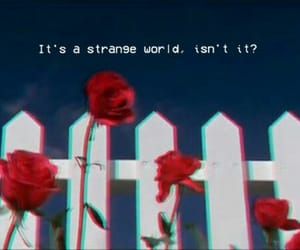 aesthetic, quotes, and red image