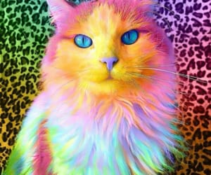 animals, multicolor, and cats image