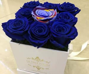 roses, blue, and bouquet image