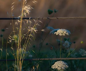 simplicity, wild carrot, and beauty in the ordinary image