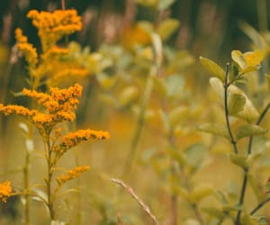 autumn, goldenrod, and new england image