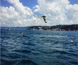 bird, blue, and istanbul image