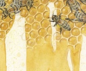 happiness, honey, and bees image