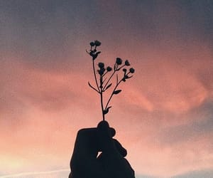 flowers, sunset, and hand image