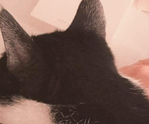 cat, header, and layout image