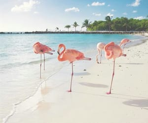 place, beach, and flamingos image