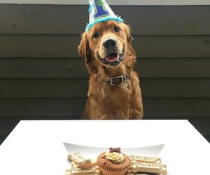 animal, happy birthday, and pets image