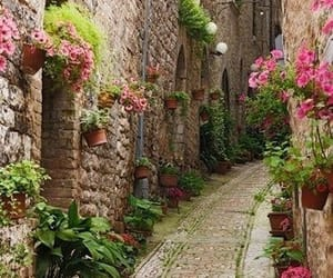 flowers and street image