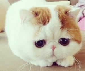 animals, fashion, and kitties image
