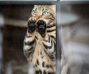 animal, cat, and pad image