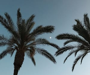 palm trees, blue, and moon image