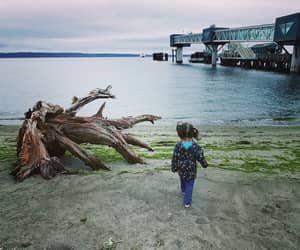 driftwood, sound, and edmonds image
