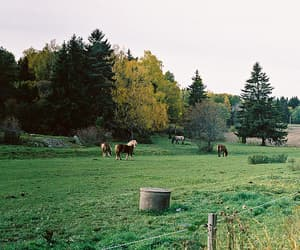 horses and woods image