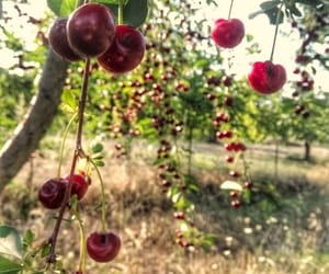 awesome, nature, and cherry image