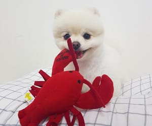 aesthetic, dog, and red image