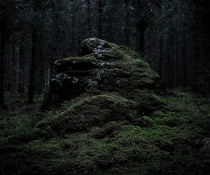aesthetic, dark, and forest image