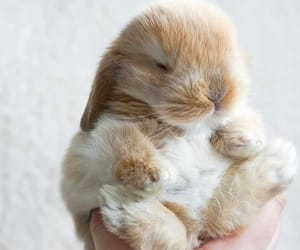 bunny and animals image