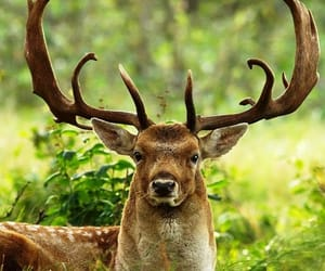 animals, woods, and antlers image