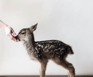 animals, baby deer, and baby image