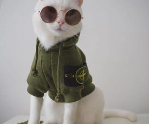 animals, fashionista, and cats image