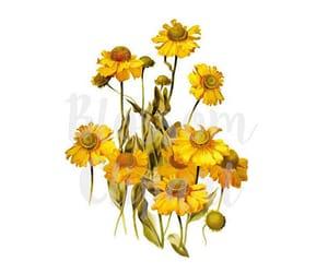 etsy, flower illustration, and botanical art image