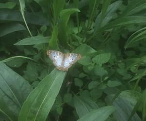 butterfly, white, and garden image