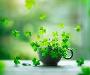 cup, green, and luck image